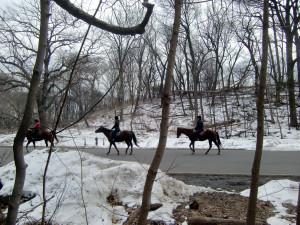 Horses horizon