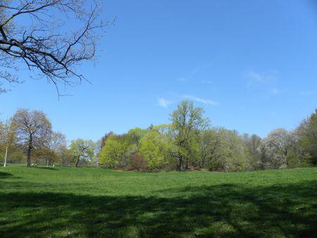 Nellie's lawn spring 4-26