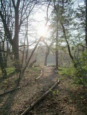 Late sun path 4-20