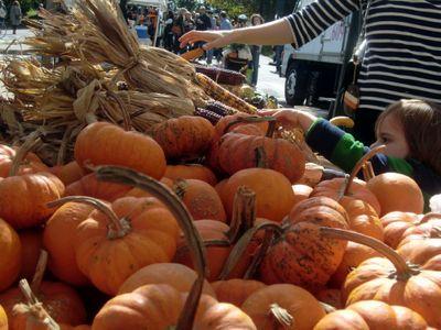 Pumpkinpicker 10-22-11