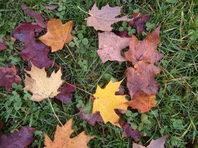 Leaves cu 11-10-11