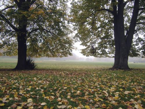 Misty meadow 11-10-11