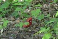 Cardinal 5-10-11