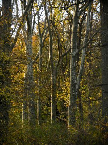 Spangled woods 11-25-11