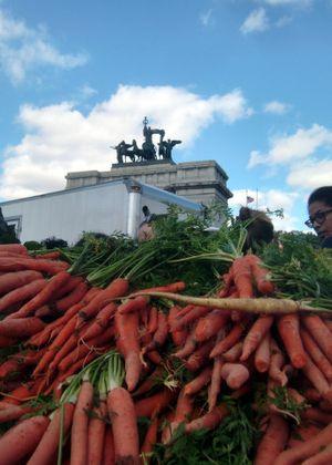 GAP carrots 10-22-11