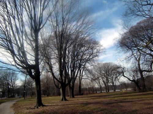 Tree diagonal 1-31-12