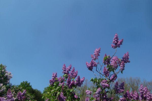 Bbg lilac sky 4-21-12