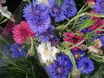 GM flowers bachbuttons