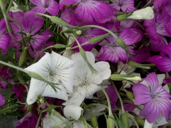 GM flowers 5-19-12