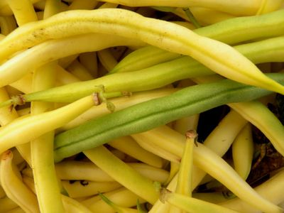 GM yellowbeans 6-11-12