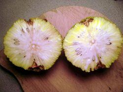 Osage orange cut 1-2-12