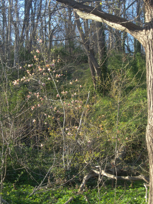 Lookout hill greenery 3-27-12