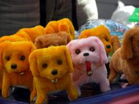 Ch toy dogs