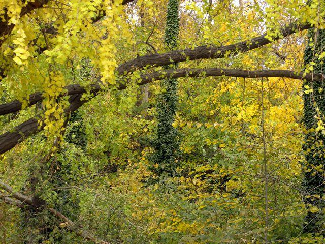 Woodlands 11-15-12