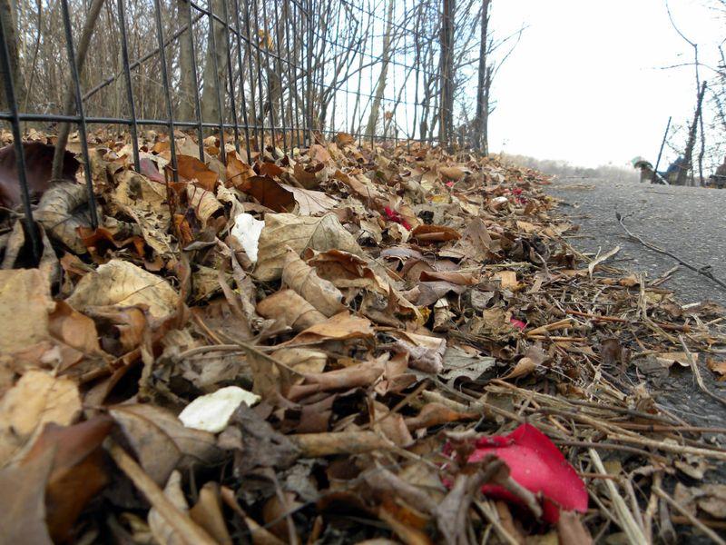 Tues petals 12-12-12
