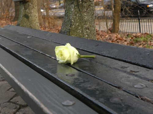 Tuesday rose 12-12-12