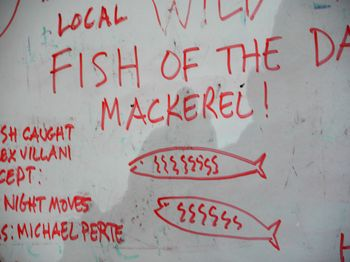 Mackerel sign 3-30-13