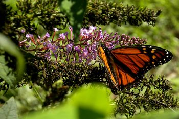 MarinePark monarch 9-21-12