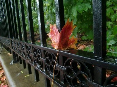 Rain leaf 9-28-12