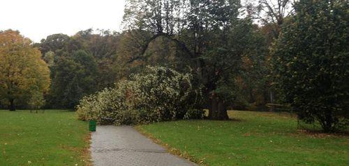 Tree down PP 10-29-12PP