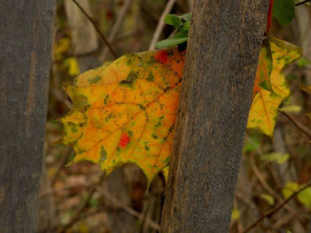 Lone leaf 11-15-12