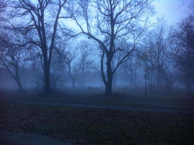 Blue mist K Friedland