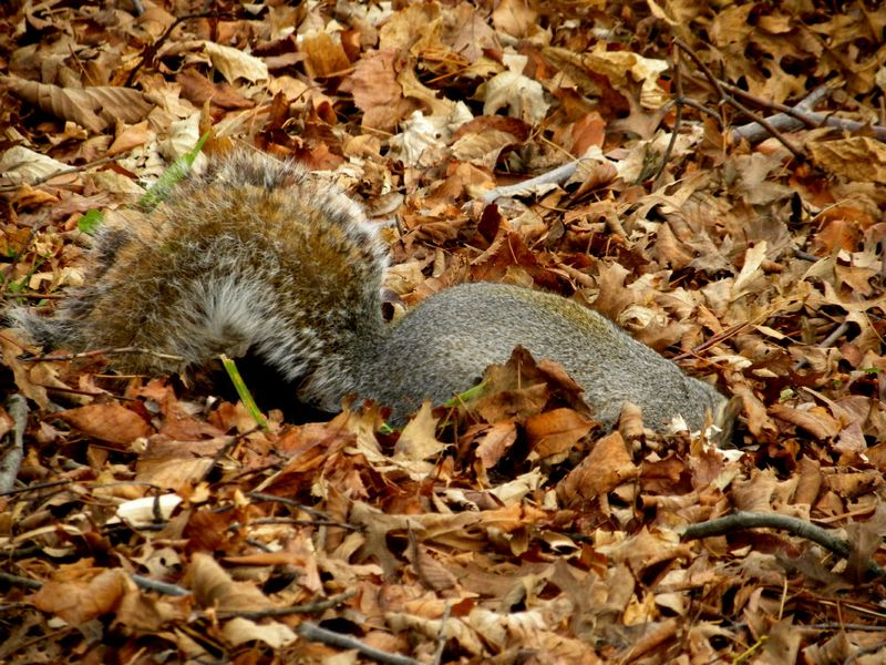 Tuesday squirrel 12-12-12