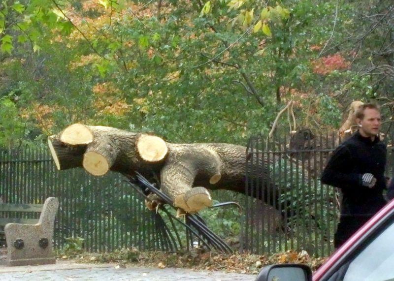 PP tree 10-31-12