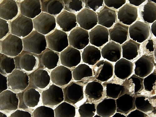 Wasp nest detail 3-27-13