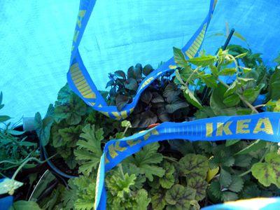 Plant sale 4-30-13