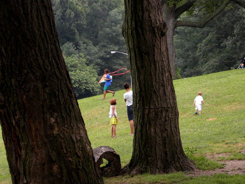 Kite tree 7-10-13