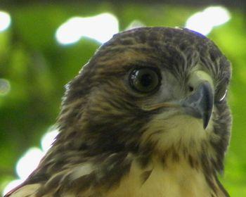 Hawkhead 7-10-13