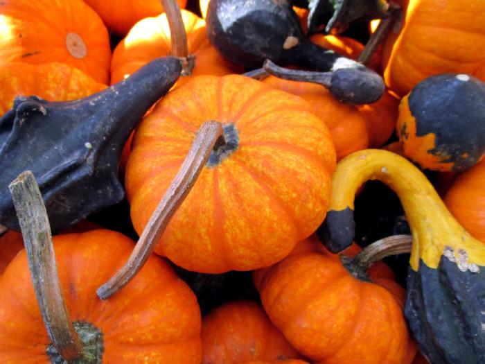 Baby pumpkins 10-26-13