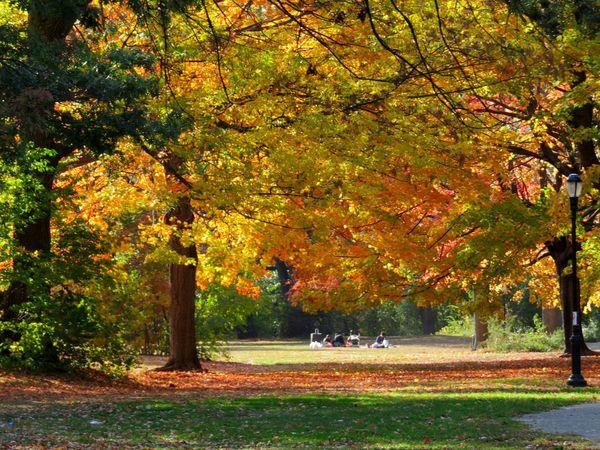 Autumn picnic 10-28-13