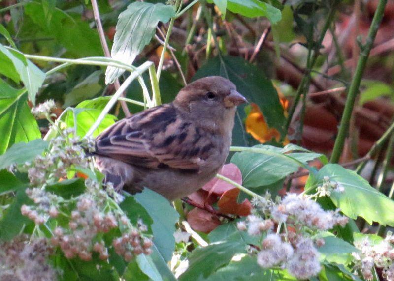 Sparrow 10-28-13