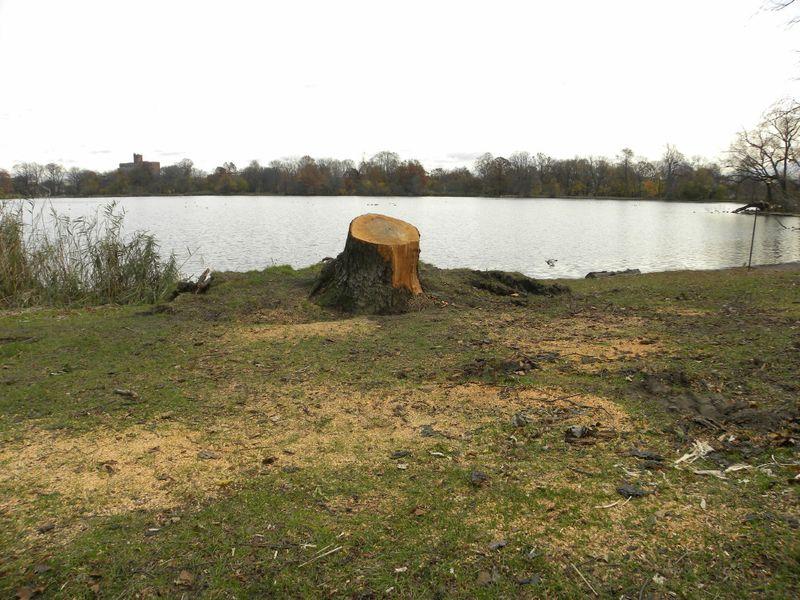 Stump lake 11-15-12