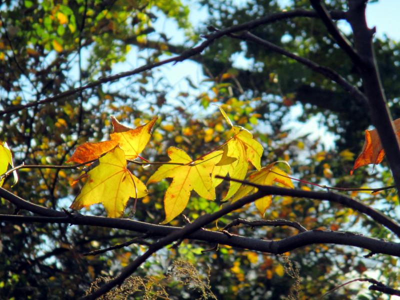 Gold tree 11-16-13