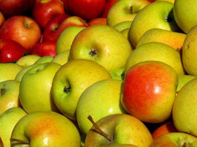 Golden apples 11-16-13