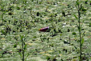 Vale sad pond