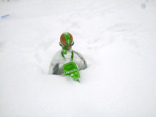 Patron in the snow