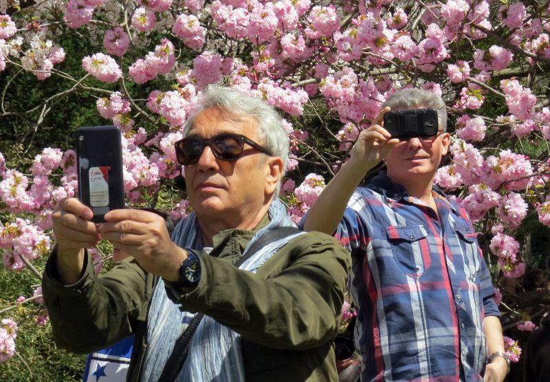 BBG cherry selfies 4-28-15