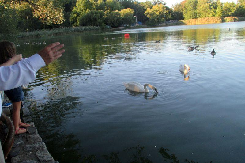 Tashlich swans ls