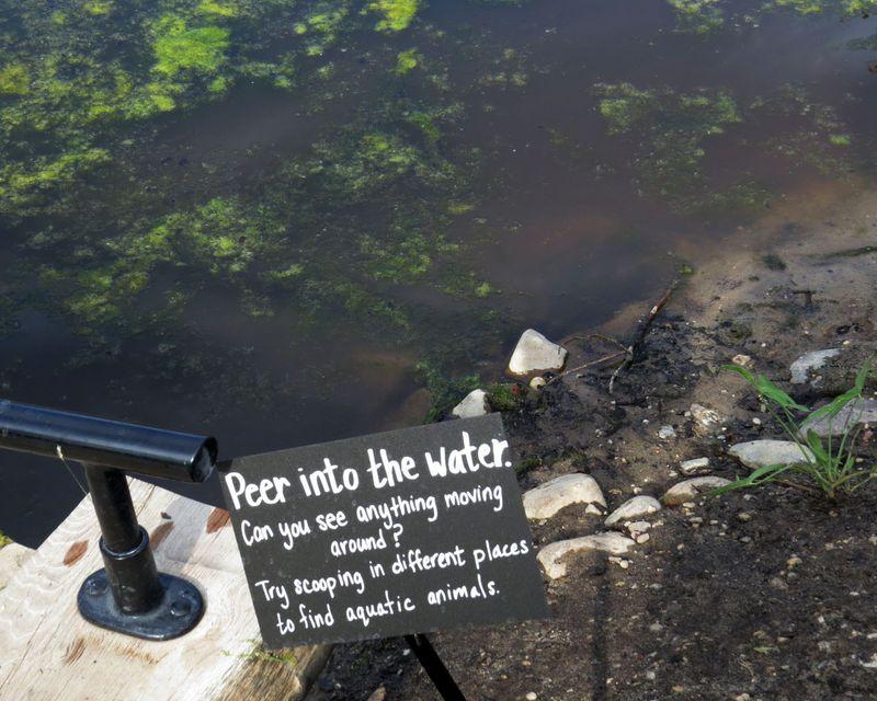 BBG Peer into water