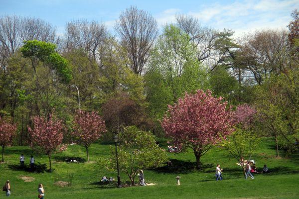 Long Meadow trees 4-23-16