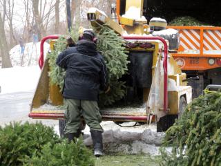 Treecycling truck 1-8-17
