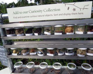 BBG curiosity collection
