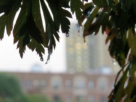 Japanese Garden Rain on leaves 9-9-15