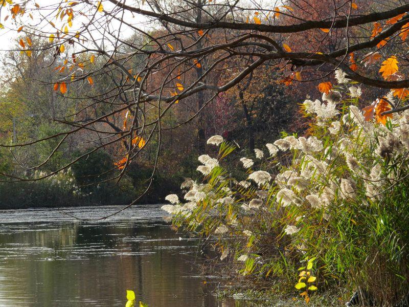 Lakeside late autumn