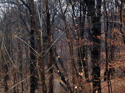 Flatbush_woods_111