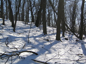 Lookout_hill_snow_slope